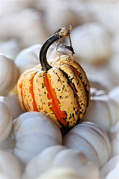 Frightful Waste: Ways to Make Your Halloween Green