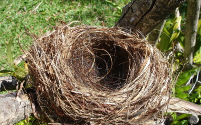 You Are Not Alone: Empty Nest Syndrome Is Common. Here's How to Cope